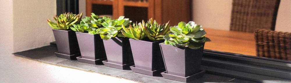 Plantas artificiales Oasis Decor