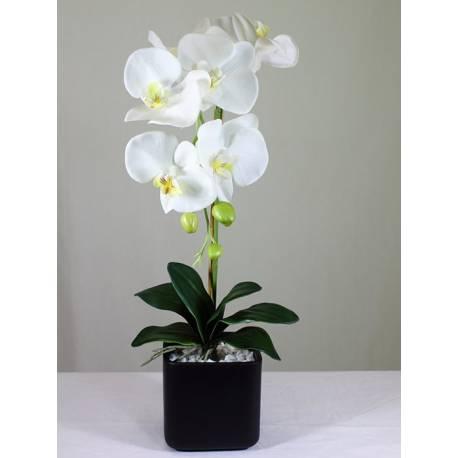 Orquidia phalaenopsis artificial amb test