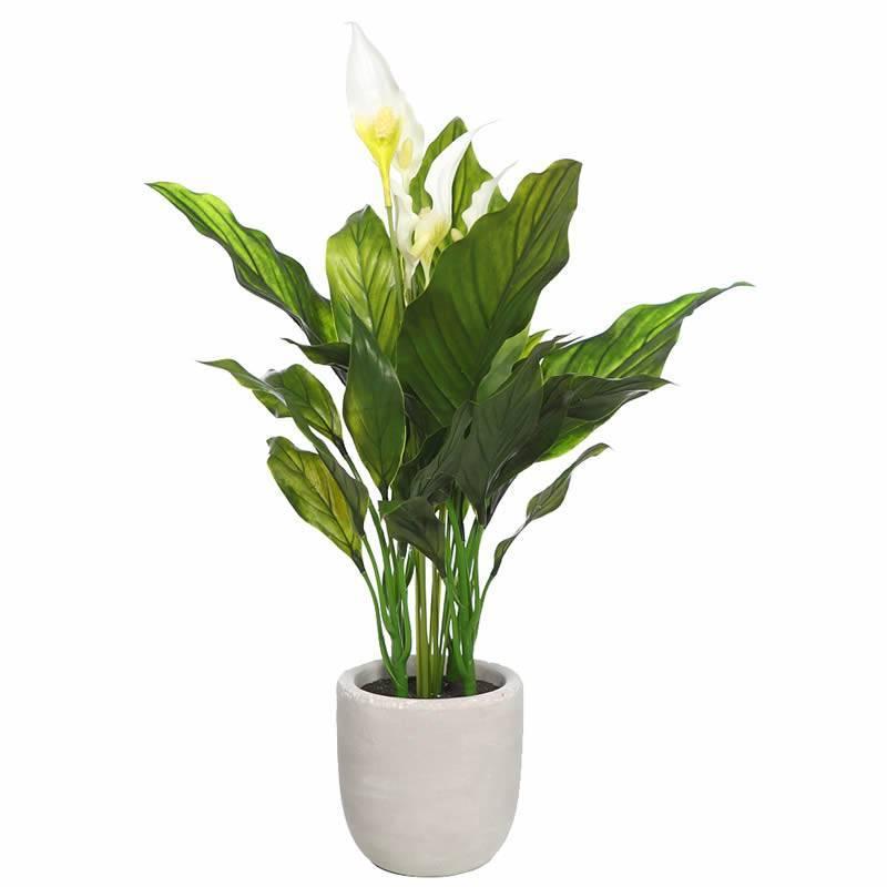 Planta artificial spatifilium con maceta de cemento oasis for Plantas en macetas