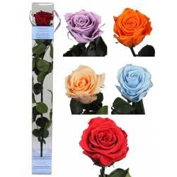 Flor rosa natural preservada grande