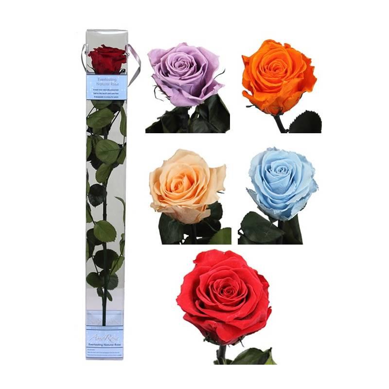 Flor Rosa Natural Preservada Grande Rosa Eterna Oasis Decor