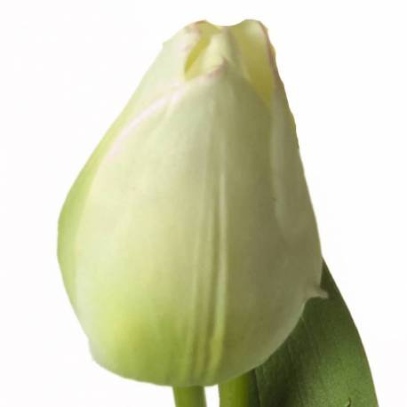 Tulipa artificial Parrot