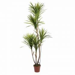Planta iuca artificial 185