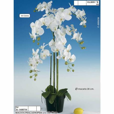 Test amb 6 phalaenopsis artificials