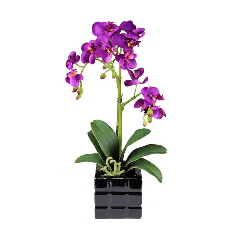 Orquideas moradas en maceta - Maceta para orquideas ...