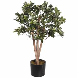 Pittosporum artificial con maceta