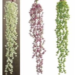 Planta que penja plastic succulenta