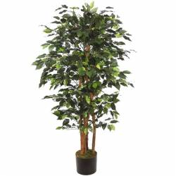 Ficus artificial con troncos naturales 130