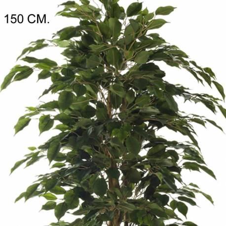 Planta artificial ficus nitida amb tractament UV