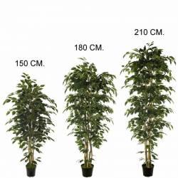 Planta artificial ficus nitida con tratamiento UV