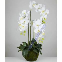 Orquidies phalaenopsis artificials amb test 080
