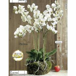 Phalaenopsis artificial en base de musgo