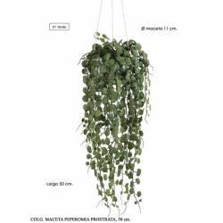 Planta que penja artificial peperomia amb test