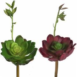 Echeveria colorata artificial
