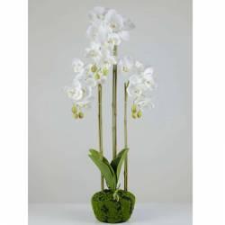 Orquideas artificiales phalaenopsis base musgo