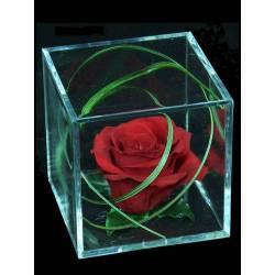 Rosa natural preservada en cubo metacrilato