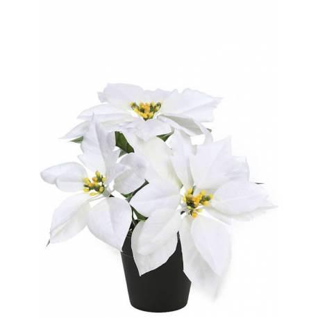 Flor de pasqua artificial en test xicoteta