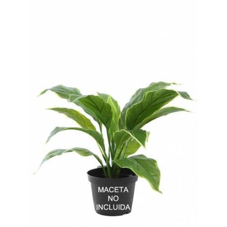 Pequeña planta hosta artificial sin maceta