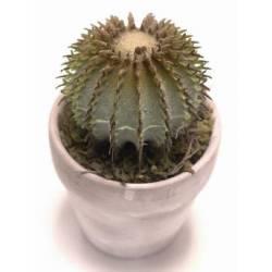 Bola mini cactus artificial con maceta