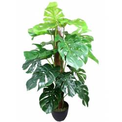 Planta philodendro en tutor con maceta