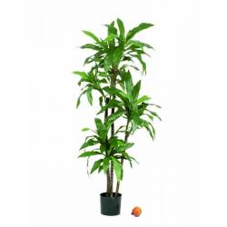Planta dracena fragans artificial 150