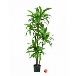 Planta dracena fragans artificial 150